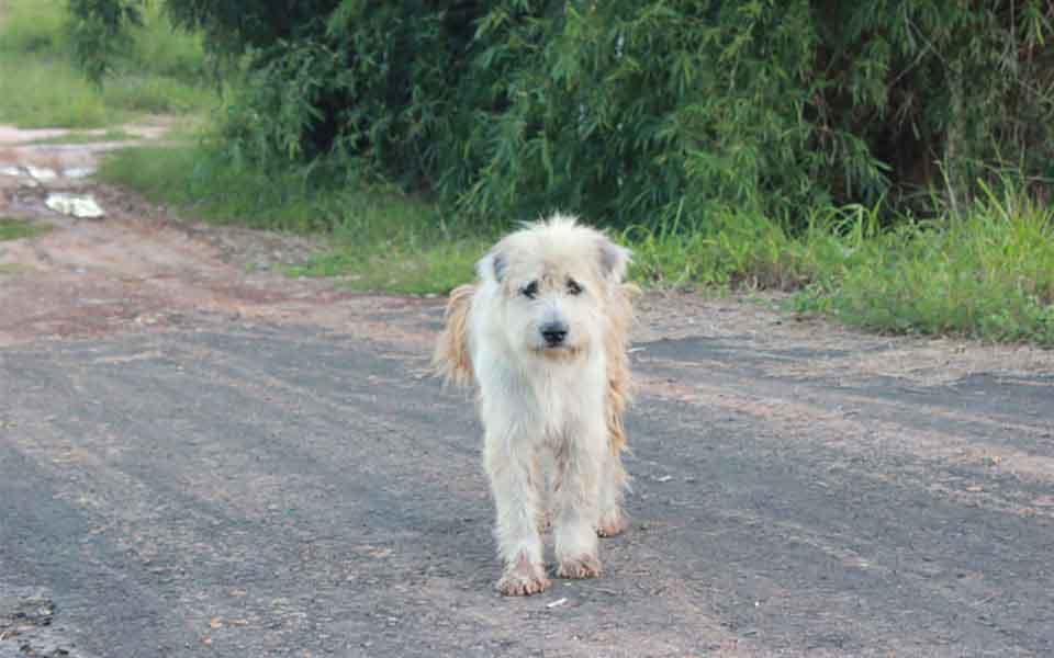 BonBon chien attendu quatre ans