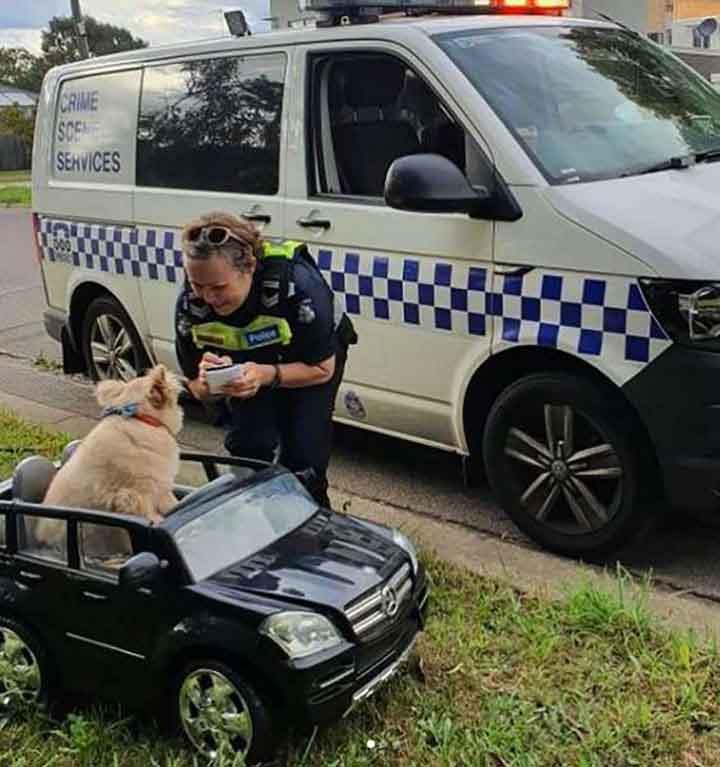 chien volant voiturette police