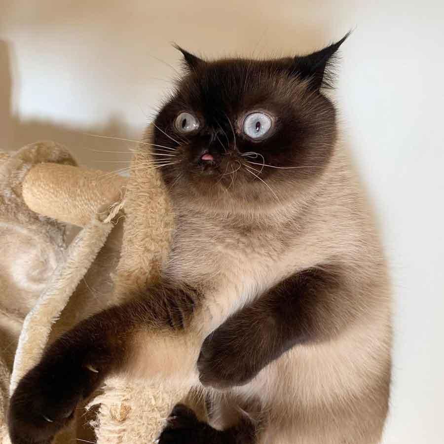 Ikiru chat langue