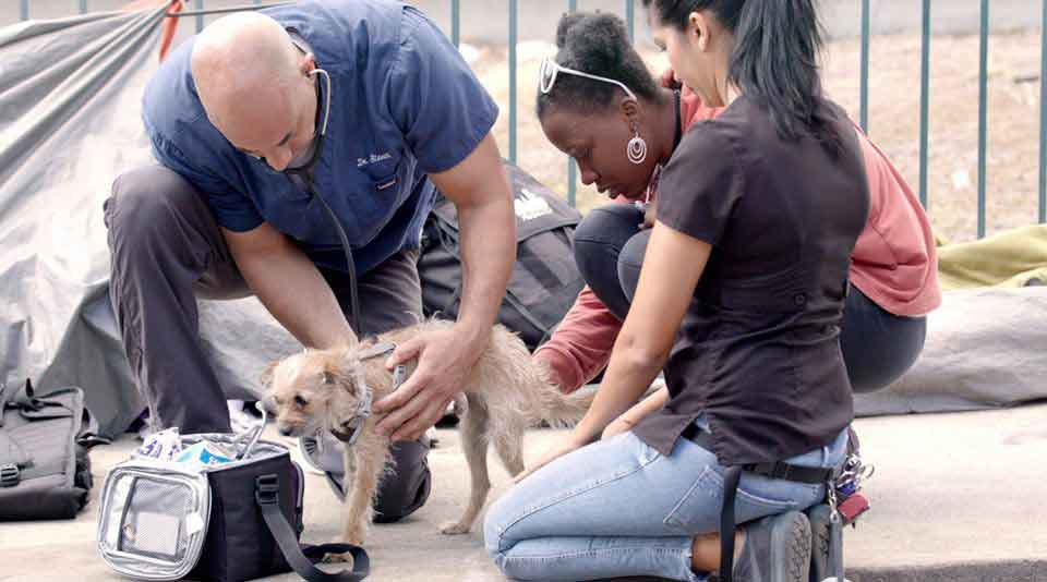 Kwane vétérinaire examine gratuitement animaux sans abri