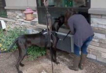 Tonka chien thérapie visite pandémie