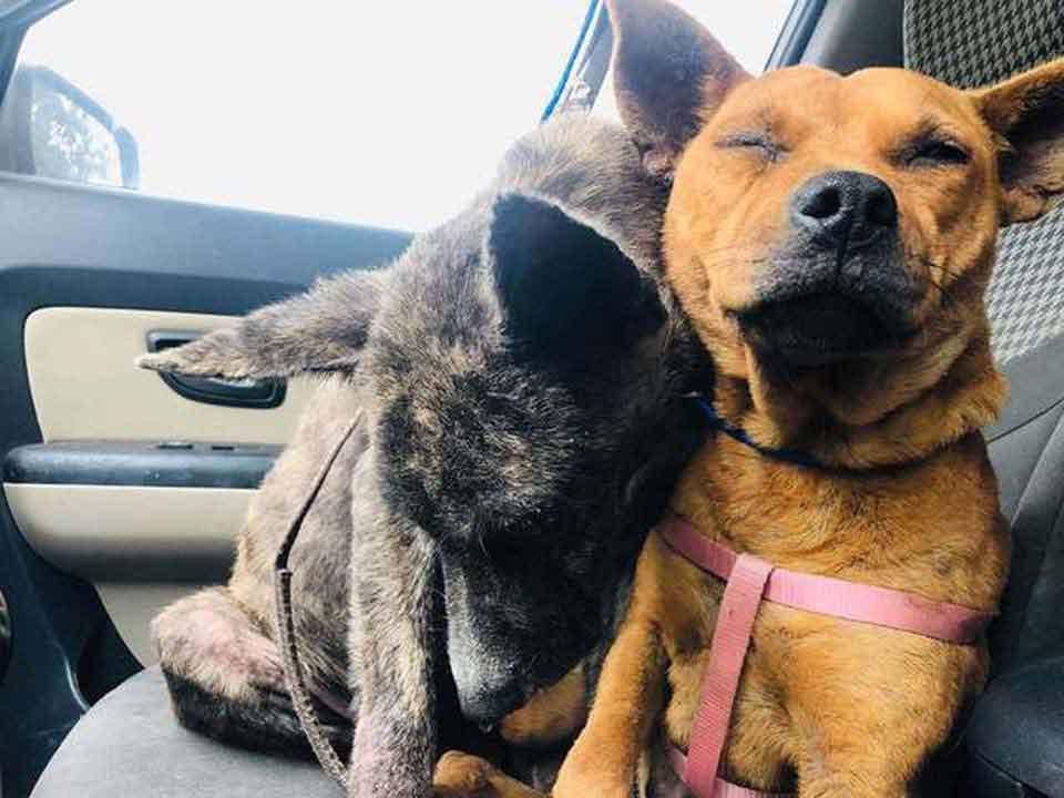 Deux chiens effrayés abandonnés