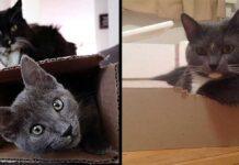 chats aiment boîtes stress