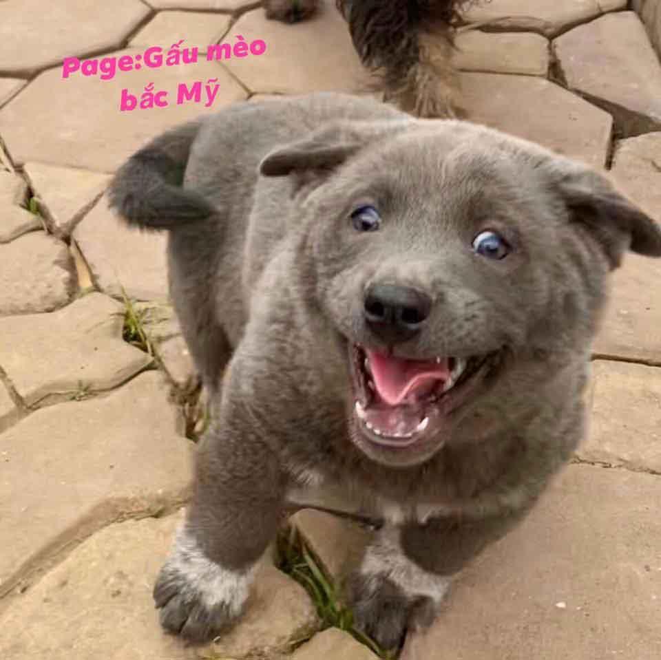 dui chiot ressemble hybride chat chien