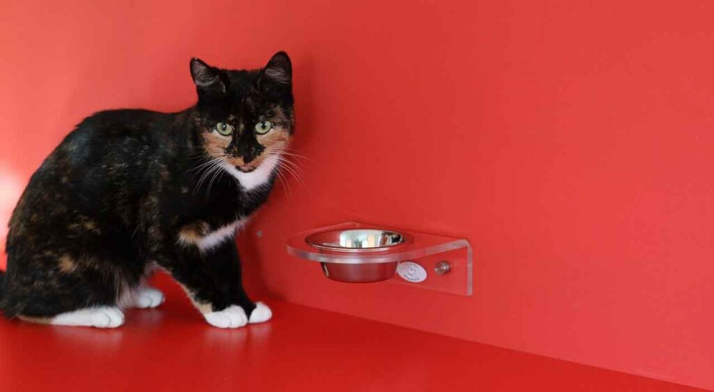 aliments interdits chats