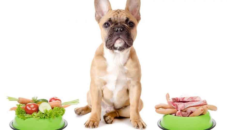 Avantages aliments faits maison chiens