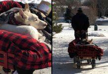 Bryant Thompson chien paralysé charrette