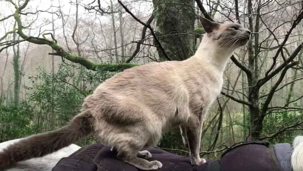 Chat Cheval Comet