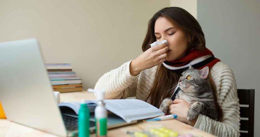 races chats personnes allergiques