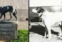 Fido chien italien