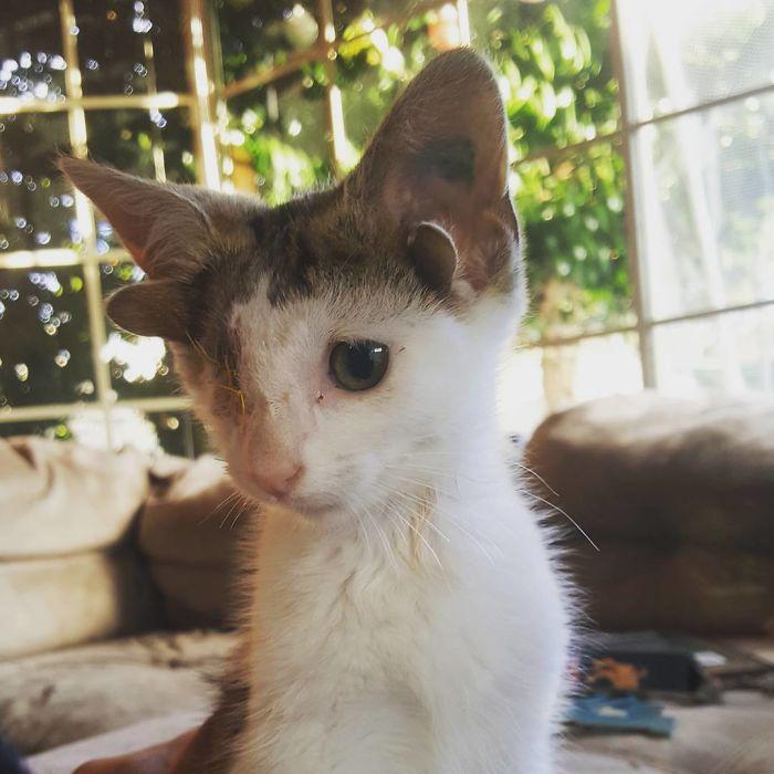 Frankie chat quatre oreilles