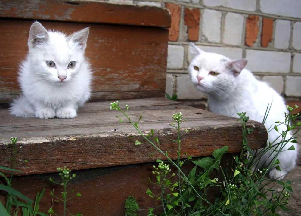 Présentation nouveau chaton chat plus âgé