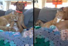 Joule Kelvin caméra chat réconfortant chien