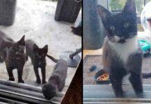 Kurtis Melanie famille nourrit chat errant