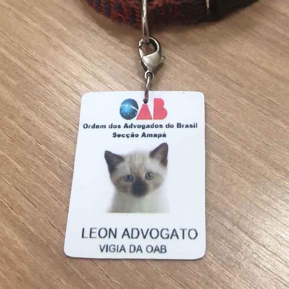 Leon chaton errant entreprise engagé avocat
