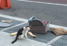 Nostrand chat abandonné rue avec affaires