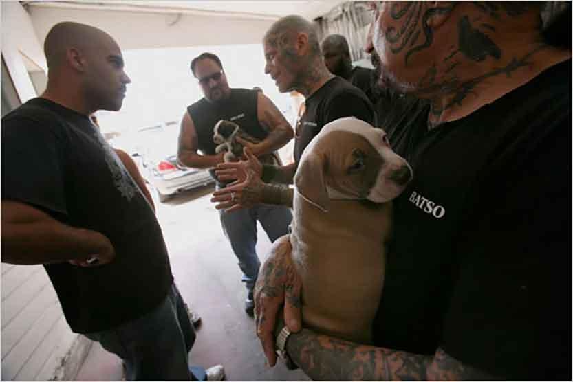 courageux motards américains Rescue Ink sauvent chiens errants