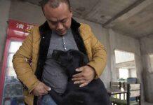 Wang Yan Chine millionnaire dépense fortune sauver chiens