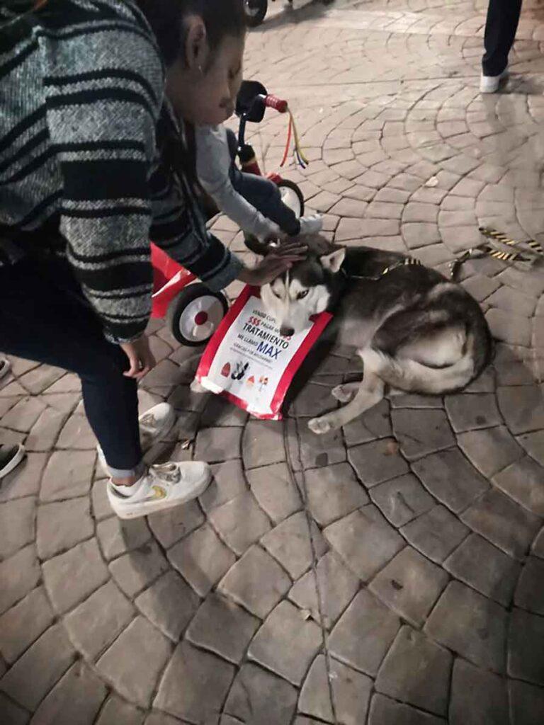 Yoselin Macias femme vend cupcakes traitement chien