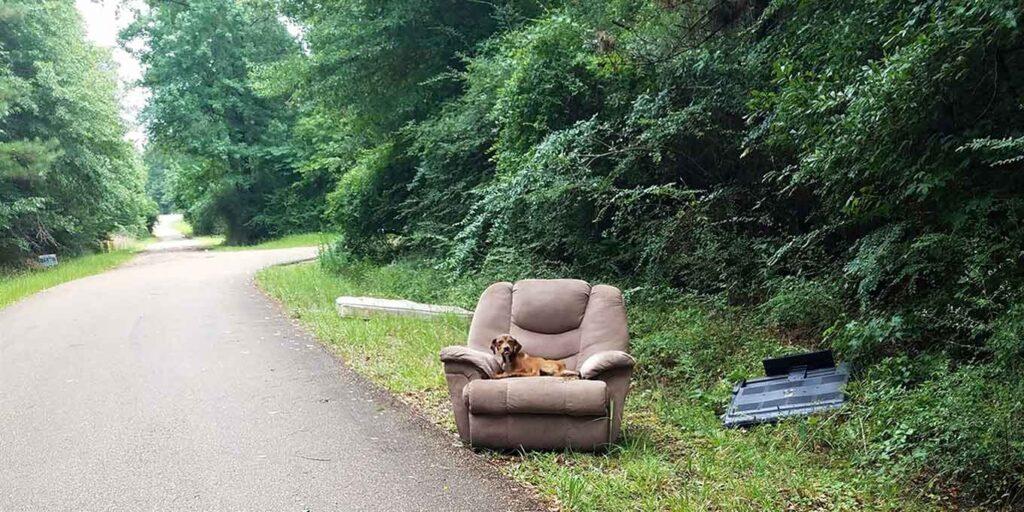 Chien abandonné fauteuil télévision