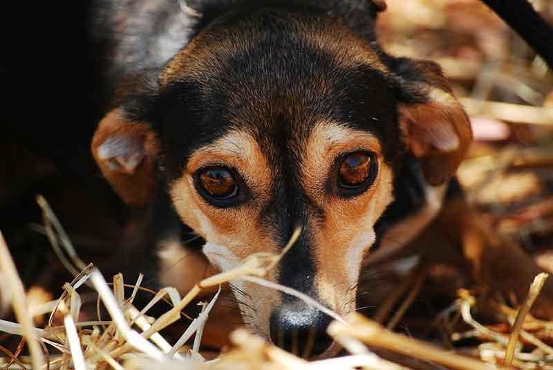 faits chiens refuge
