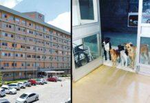 groupe chiens hôpital propriétaire sans-abri