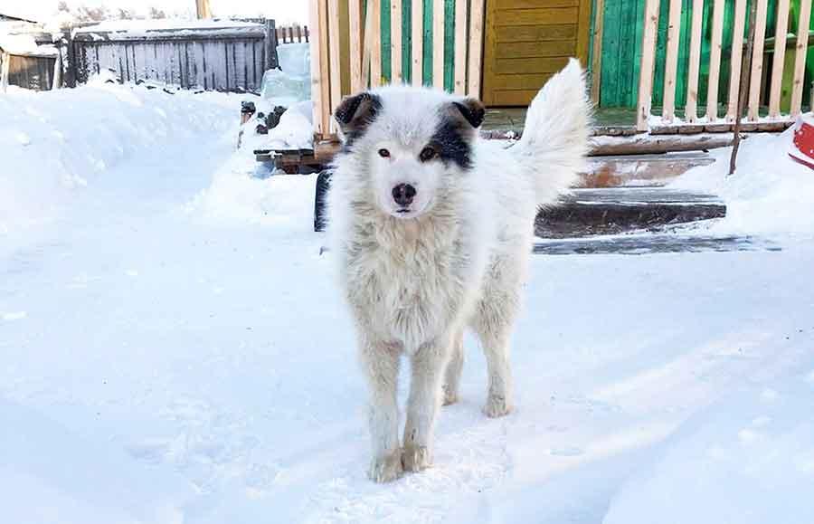 chien héros sauve bébé Sibérie