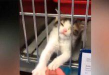 petit chaton abandonné prie adoption
