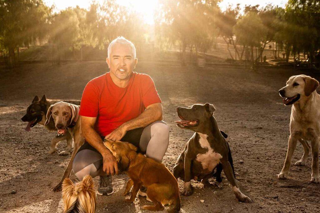 Cesar Millan chien parfait