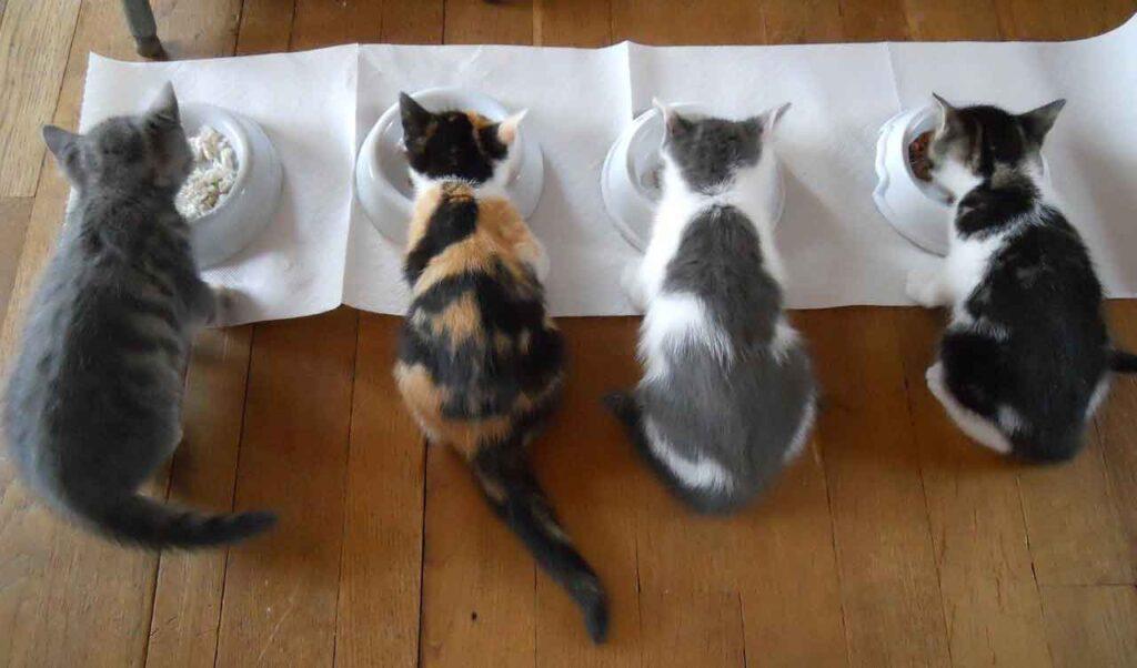 changer nourriture chat