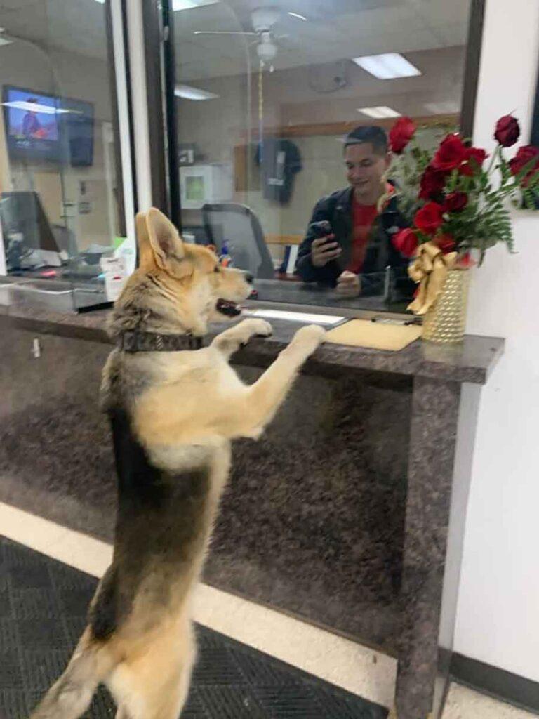 chien entre poste police disparition