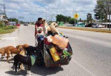 Edgardo Perros Zúñiga Mexique homme sauve chiens errants
