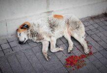 Espagne amende agression abandon animaux