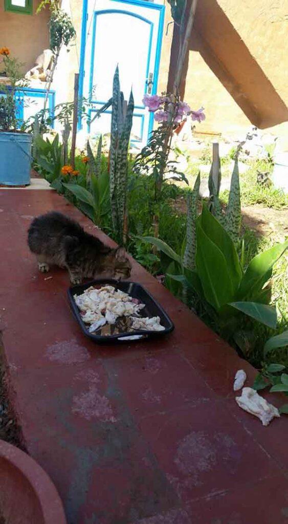 Maroc Amal SAFE refuge