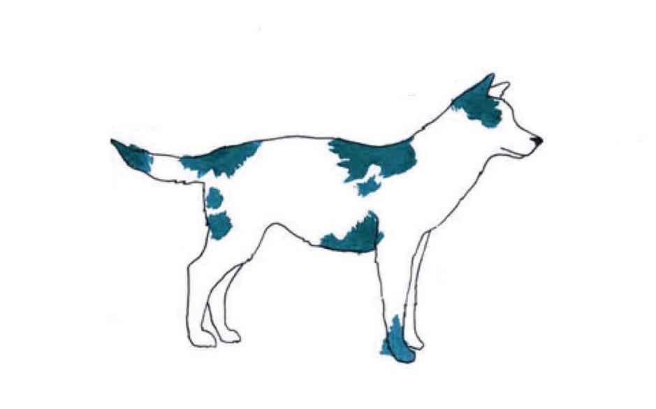 langage corporel chien