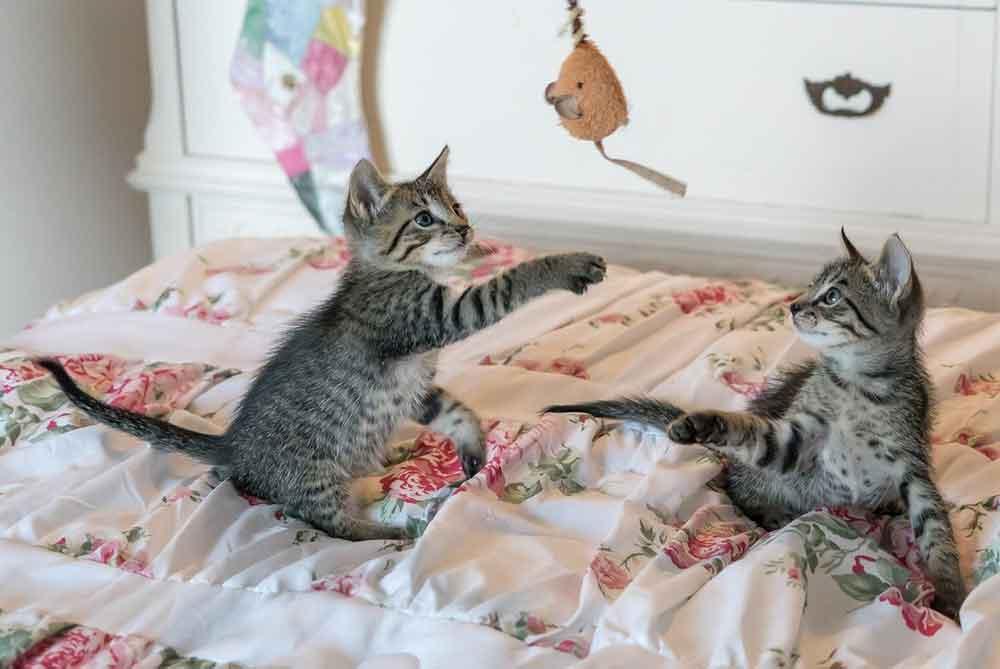 jouer avec chat