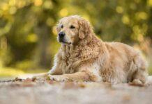 chiens pour nouveaux propriétaires