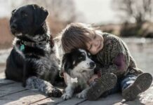 humains aiment chiens plus