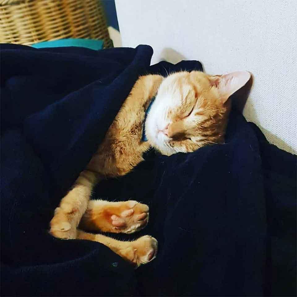 chat Tigger maison voisins nuit