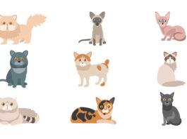 aperçu races chats