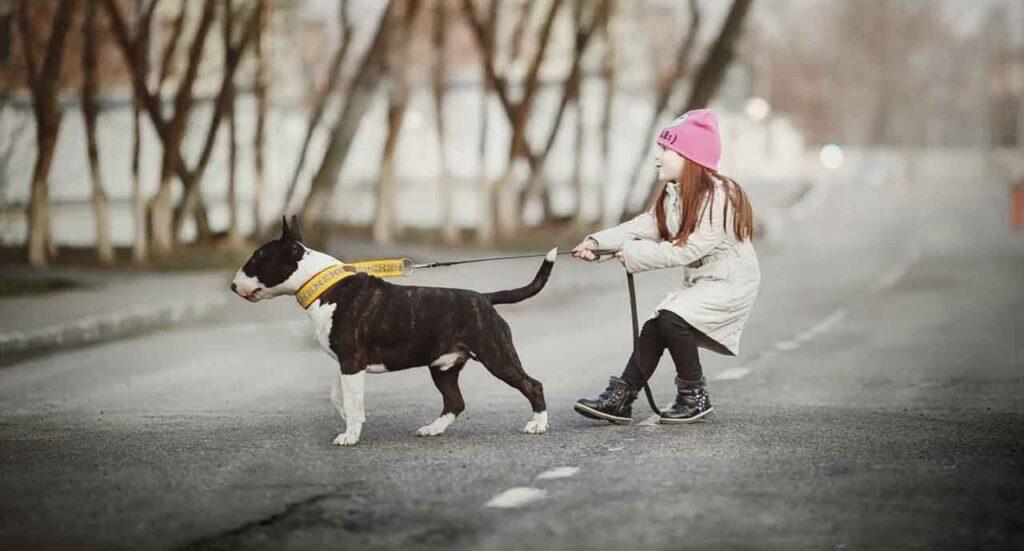 chien obéissance