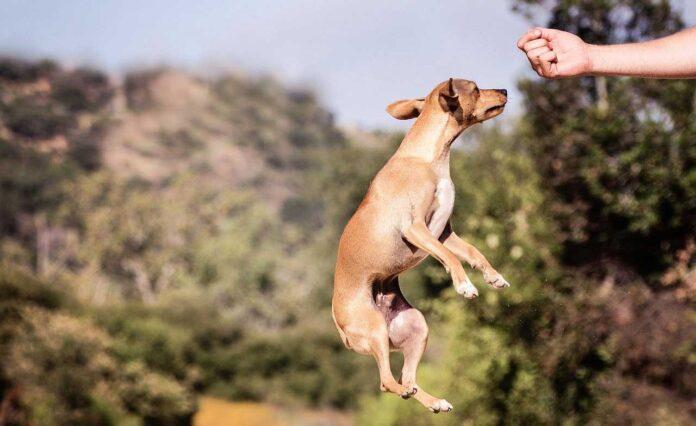 Conseils de dressage de chien