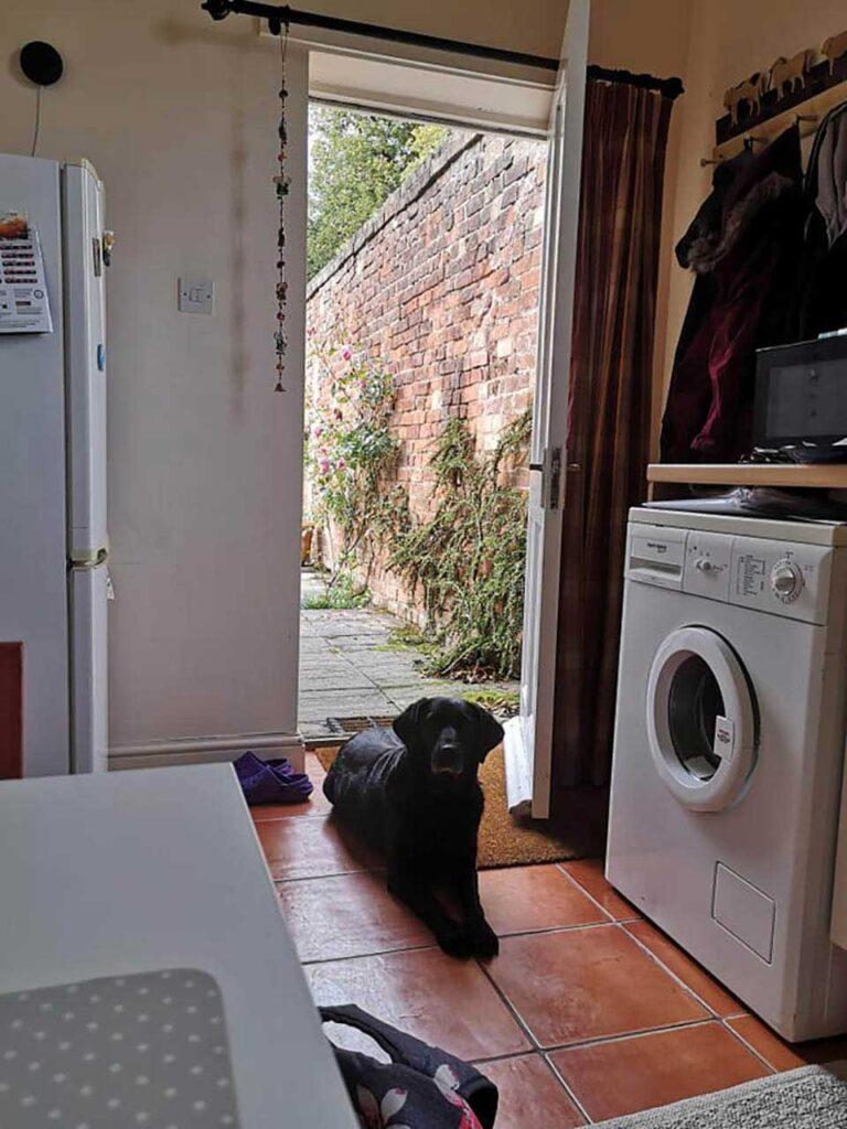 chien visite voisine chaque matin