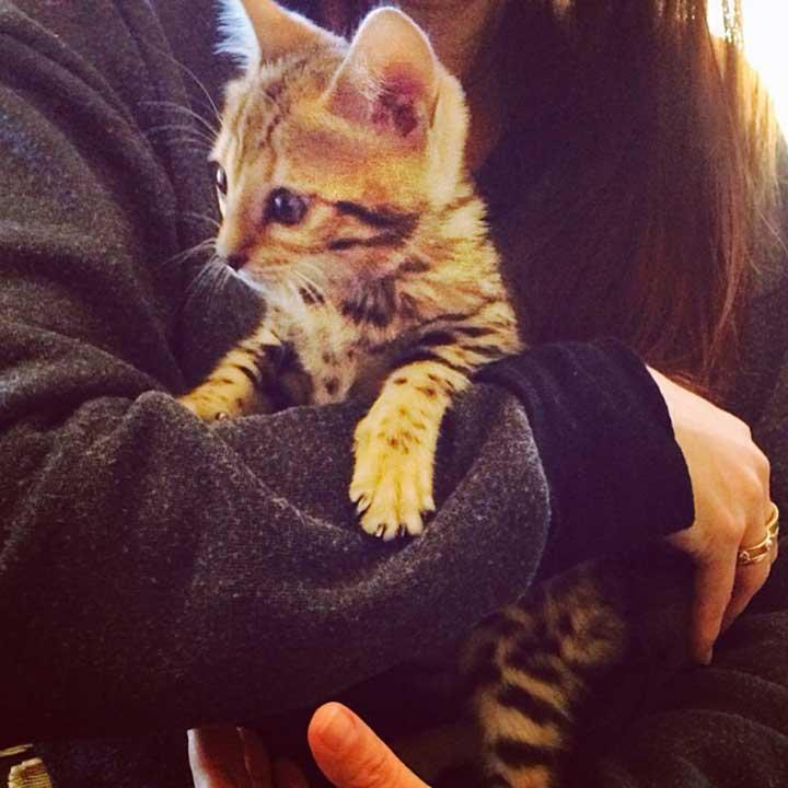 chats mignons célébrités Kourtney Kardashian