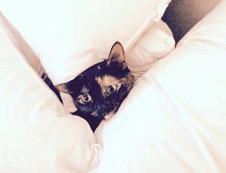 chats mignons célébrités Lea Michele