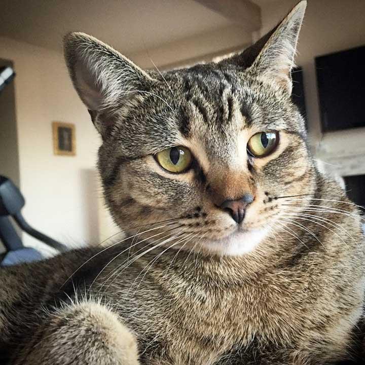 chats mignons célébrités Macklemore