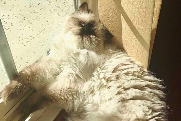 chats mignons célébrités Peyton Clark