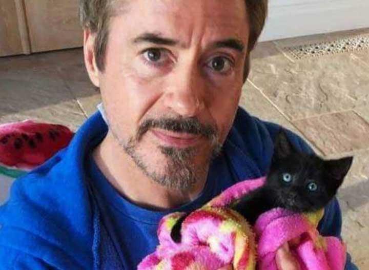 chats mignons célébrités Robert Downey Jr.