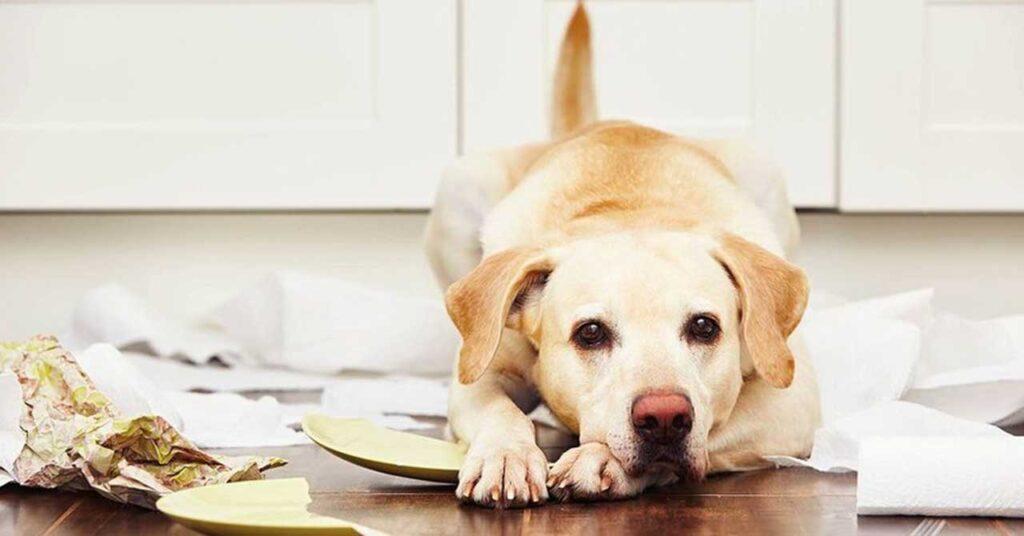 Anxiété séparation chien