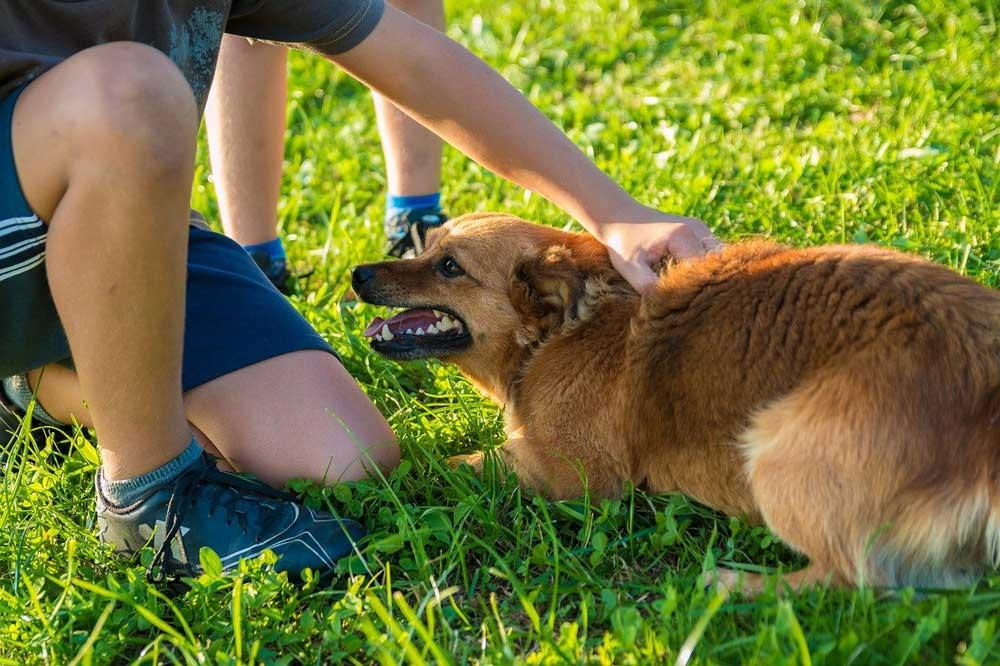 choses terrifient chiens peurs phobies